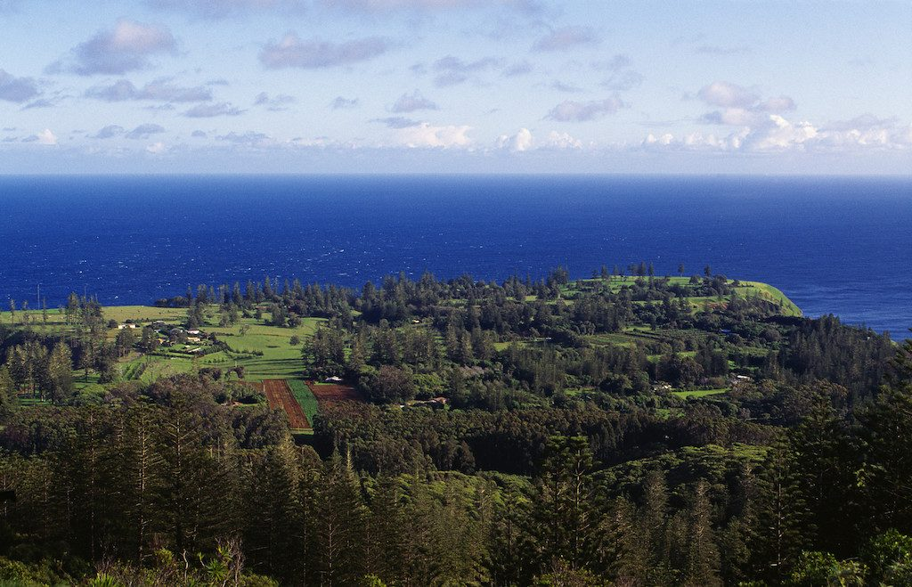 looking down hill to norfolk island pine trees, green land and deep blue ocean in background