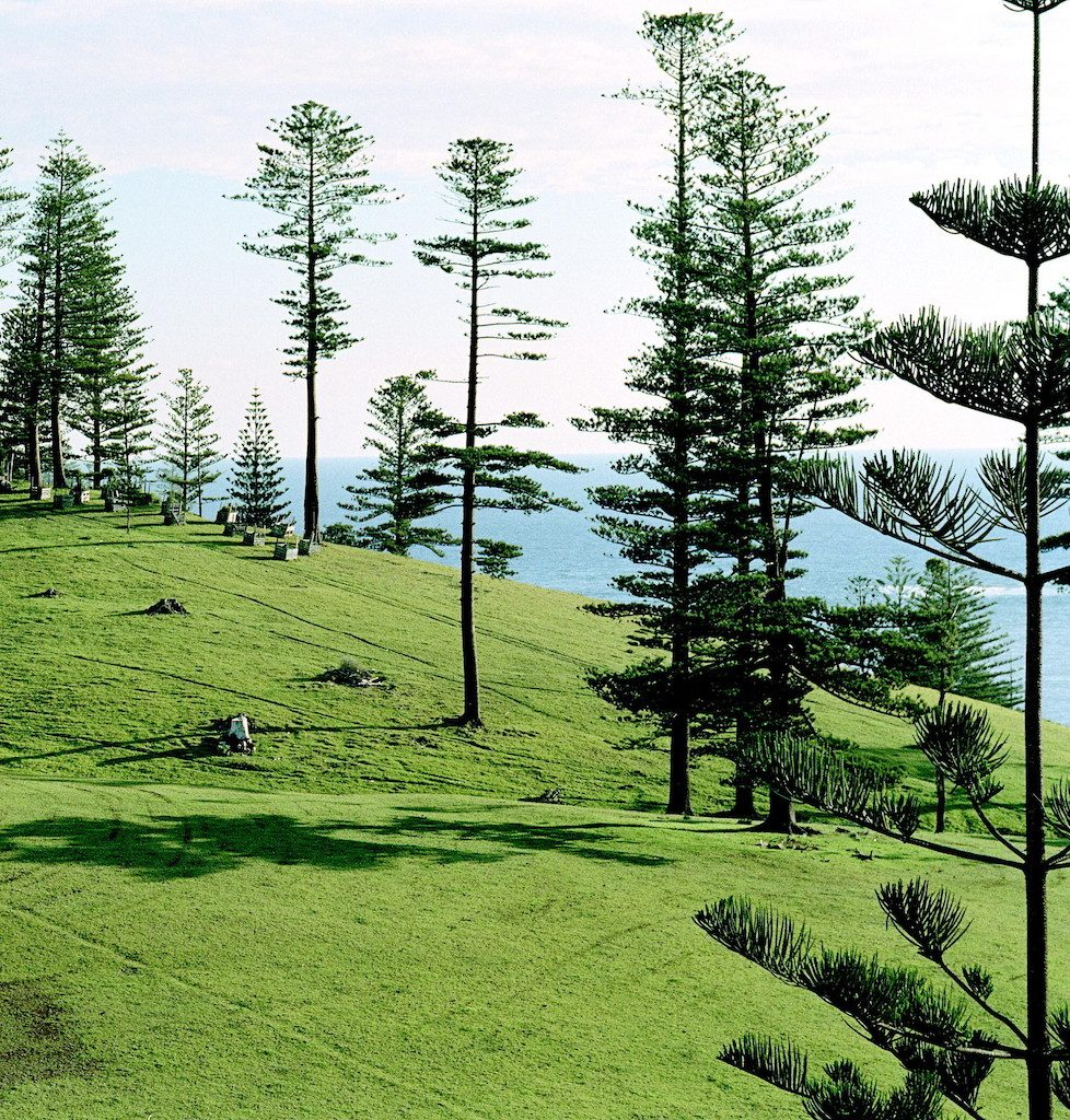 green grass over a hill with norfolk island pines and blue ocean in background
