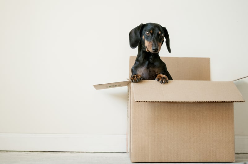 Sausage dog sitting in a removal cardboard box, halfback retirees (and others)